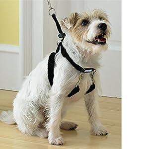Amazon.com : Martha Stewart Pets Training Harness For Dog XS-L