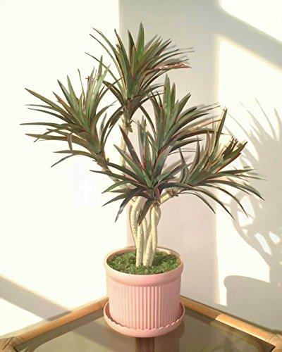 Yucca Palmier (60cm) - Arbre Artificiel SANS POT