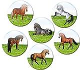 Pferde auf der Wiese - Tierische Magnete 6er-Set Ø 5 cm - Kühlschrankmagnete mit Pferdemotiven für Magnettafel Pinnwand Magnetpinnwand Memoboard Whiteboard - Original Magnete GUMA Magneticum