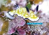かわいいウミウシ