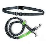 Mighty Paw Hands Free Dog Leash, Premium Running Dog Leash, Lightweight Reflective Bungee Dog Leash