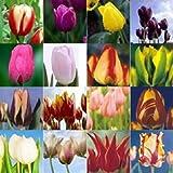 graine fleurs tulipe de couleurs lot de 20 graines coloris assortit ENVOI SOUS 48H