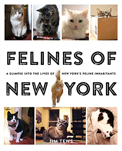 Download Felines of New York: A Glimpse Into the Lives of New York's Feline Inhabitants