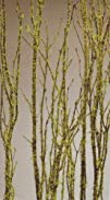 Birch Branches with Moss 3-4 Ft, Pack of 5