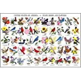 USA State Birds and Flowers Poster Print