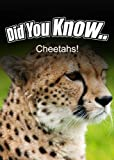 Cheetahs (Did You Know)