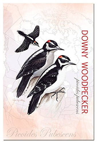 tree-free-greetings-66308-12-count-downy-woodpecker-notecard-set