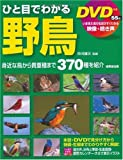 DVD付き ひと目でわかる野鳥