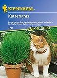 Amazon.de Pflanzenservice 910271 Kiepenkerl Katzengras