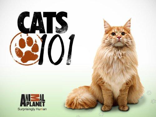 Cats 101 Season 2,