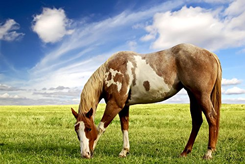 Chevaux-de-Collection-1-Papier-peint-photo-200-x-300-cm-Diffrents-designs-et-tailles-disponibles