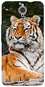 The Racoon Grip snow tiger hard plastic printed back case for Alcatel Onetouch Idol X 6040D