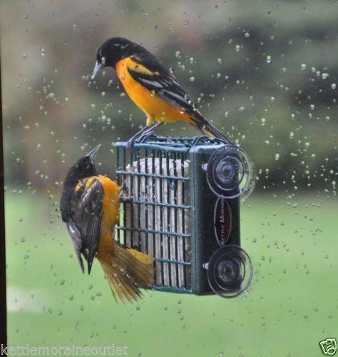 kettle-moraine-window-mount-suet-cake-wild-bird-feeder-8315wm-up-close-viewing