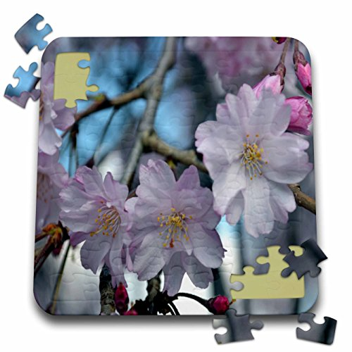 WhiteOak Photography Floral Prints - Cherry Blossom Tree - 10x10 Inch Puzzle (pzl_45340_2)