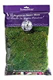 SuperMoss (21512) Sheet Moss Preserved, Fresh Green, 8oz