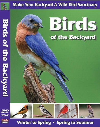 birds-of-the-backyard-winter-in-to-spring