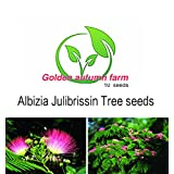 Golden autumn farm -10 MIMOSA / PERSIAN SILK TREE Albizia Julibrissin Seeds/Bonsai Persian Pink Silk Tree