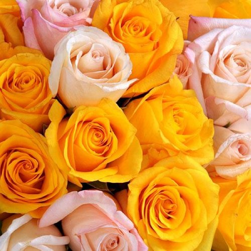 Send Fresh Cut Bulk Flowers - 200 Long Stem Assorted Roses Wholesale
