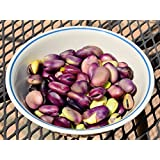 Italian Heirloom Precoce Violetto Fava Bean Seeds by Stonysoil Seed Comany