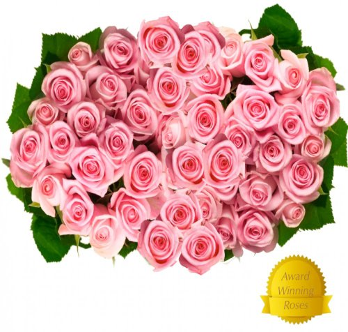 Flower Delivery – 50 Giant, Incredibly Fragrant Long Stem Pink Roses with FREE GIFT MESSAGE From Spring in the Air Luxury Roses