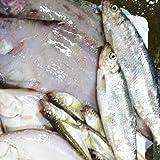 鮮魚を急速冷凍!北海道お魚福袋3kg