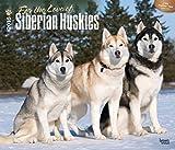 For the Love of Siberian Huskies 2016 Deluxe Wall Calendar