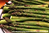 Asparagus connover's colossal - 100 seeds