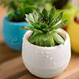 Mini 7*6.5CM Round Home Garden Office Decor Planter Plastic Plant Flower Pot