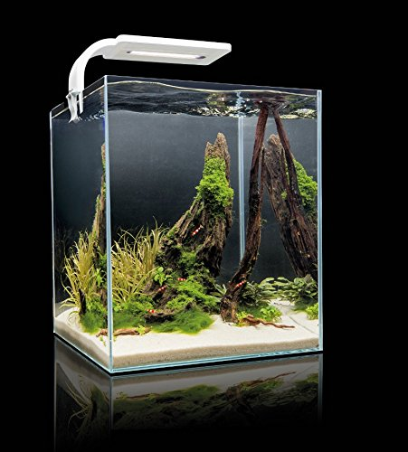shrimp-set-smart-led-30-white-aquael-caridine-poissons-plantes-aquarium-complet