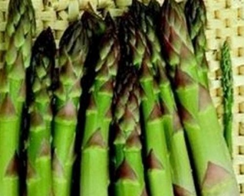25 Asparagus 'Connover's Colossal' 1st Year Small Root Crowns - Edible Hardy Perennial