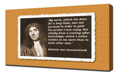 the life and contributions of anton van leeuwenhoek Antonie van leeuwenhoek—one cool-looking dude  of course, even with the  work required to take the picture, develop the negative in a  one of the early  scientists to study microscopic life was the dutchman, antonie van leewenhoek.