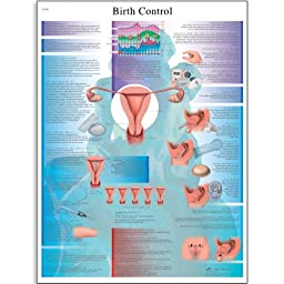 3B Scientific VR1591L Glossy Laminated Paper Birth Control Anatomical Chart, Poster Size 20\