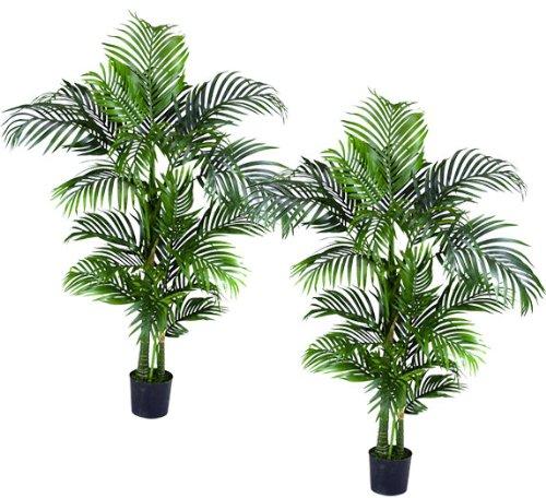 Areca palms for Areca palm safe for cats