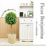 【鉢カバーセット】まんまる仕立てのベンジャミン トピアリー8号♪お洒落な鉢カバーC、受け皿付