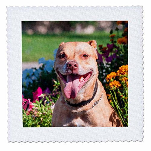 Danita Delimont - Dogs - Pit Bull in flowers - 12x12 inch quilt square (qs_230311_4) (Pitbull Quilts compare prices)