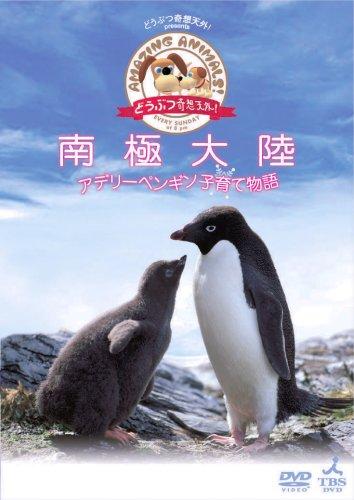 「どうぶつ奇想天外!」presents南極大陸・アデリーペンギン子育て物語 [DVD]
