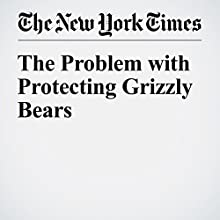 The Problem with Protecting Grizzly Bears Other by Steven Rinella Narrated by Kristi Burns