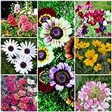 Biocarve Tall Borders Flower Kit-7 Packets
