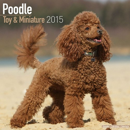 Toy & Miniature Poodle Calendar - Just Toy & Miniature Poodle Calendar - 2015 Wall calendars - Dog Calendars - Monthly Wall Calendar by Avonside