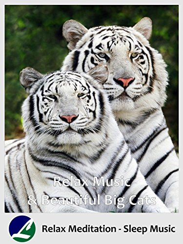 Relax Music & Beautiful Big Cats