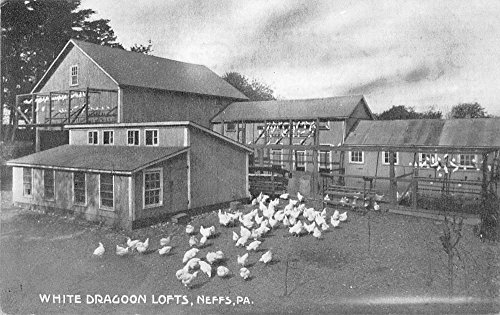 Neffs Pennsylvania White Dragoon Lofts Chickens Antique Postcard K32797 (Chicken Loft compare prices)