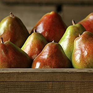 Webster Comice Pears - 7 lbs - Pears From the Fruit Company