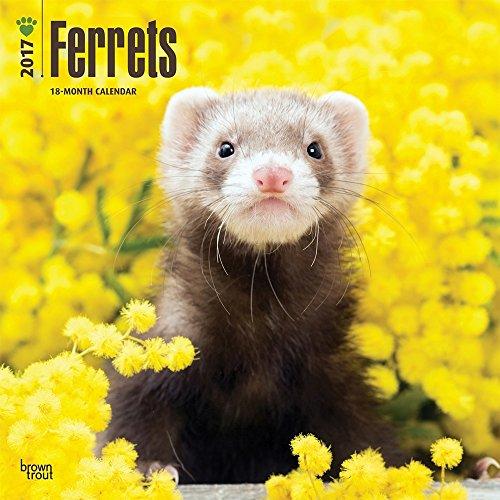 Ferrets 2017 Wall Calendar
