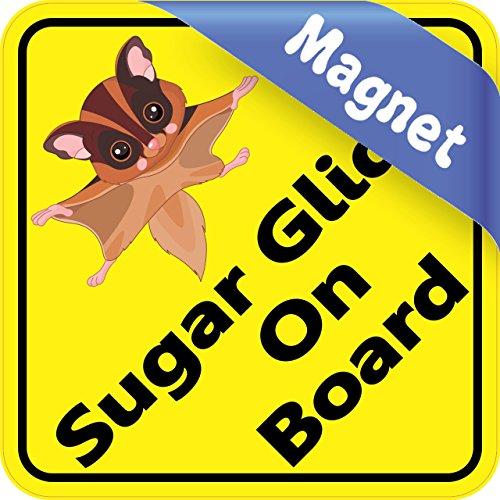 6in x 6in Sugar Glider On Board Animals Magnet Magnetic Vehicle Sign