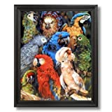 Tropical Parrot Bird Collage Animal Wildlife Home Decor Wall Picture Black Framed Art Print
