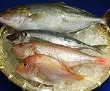 【もったいない魚】もったいないセット500g【冷凍】