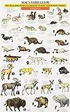 Mac's Field Guide to Yellowstone & Grand Teton National Parks: Birds &  Mammals (0898866723) by Craig MacGowan