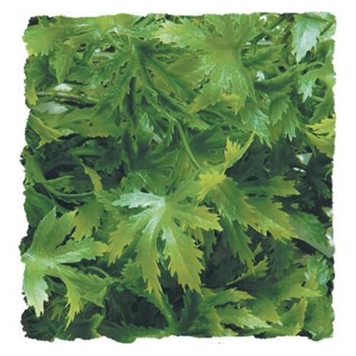 Zoo Med Naturalistic Bush Plant Amazon Phyllo, Large