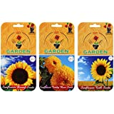 Flower Seeds Packets (3 In 1) - Sunflower Teddy Bear Double And Sunflower Dwarf And Sunflower Tall - (summer Sowing Seeds) - By Gate Garden