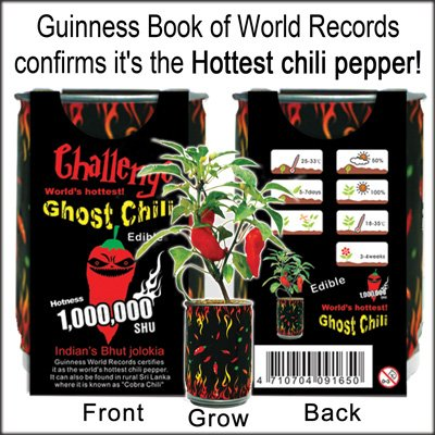 Ghost chili pepper - The hottest pepper in the world